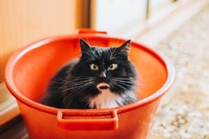 How much does pet insurance cost for cats?