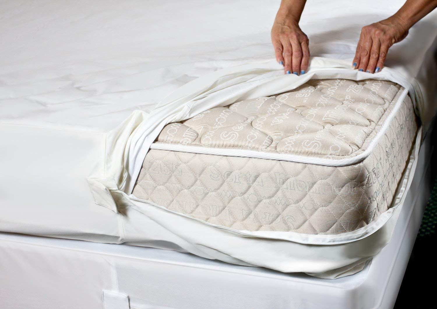 how to get rid of bed bugs in a mattress: treat the mattress