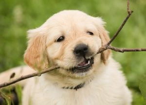 Is pet insurance worth getting? Here are some alternatives.