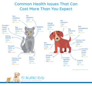 Is pet insurance worth getting? Most common claims.