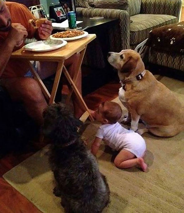 two dogs and a baby