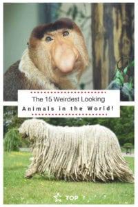 weirdest animals in the world