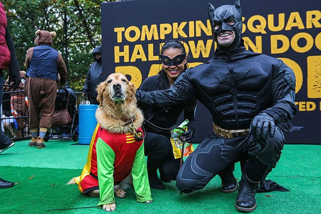 batman, catwoman, and robin pet and owner halloween costumes