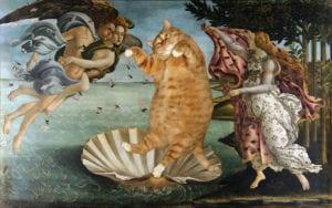 cat art the birth of venus sandro botticelli