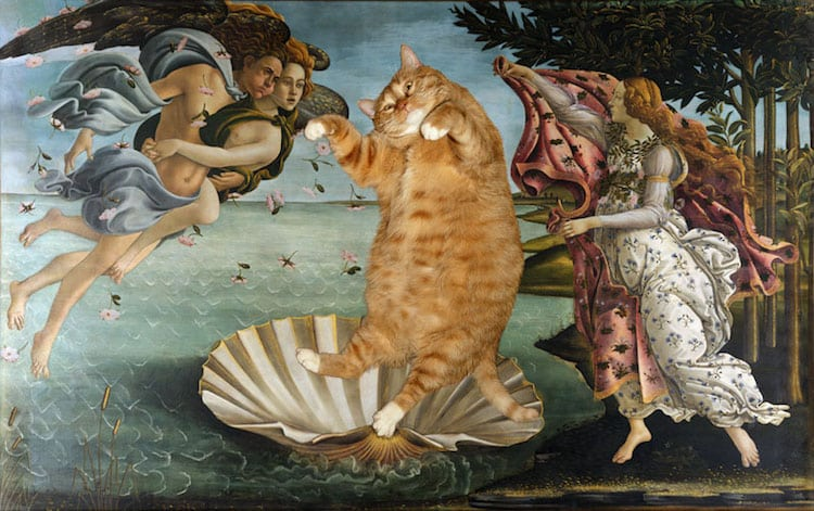 cat art the birth of venus sandro botticelli