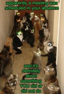 cat meeting - crazy cat ladies