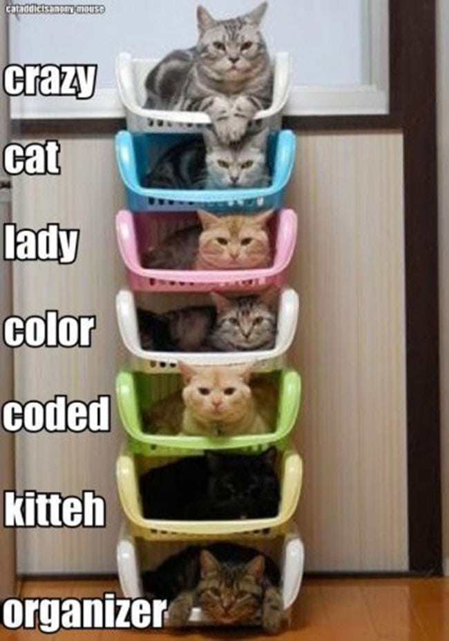 cat storage for crazy cat ladies
