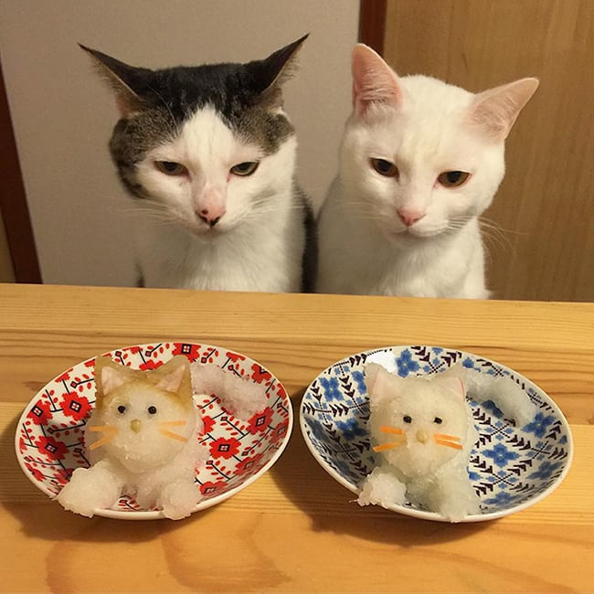 crazy cat ladies - cats eating lunch