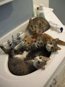 crazy cat ladies - cats in the bathroom