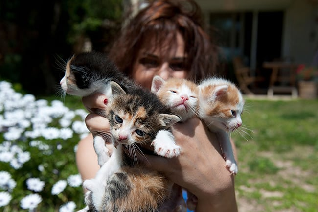 20 Signs You Are a Member of the Crazy Cat Ladies Society