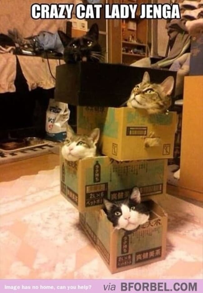 crazy cat ladies play cat jenga