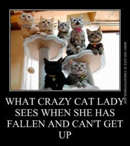 crazy cat ladies - the cats are watching you
