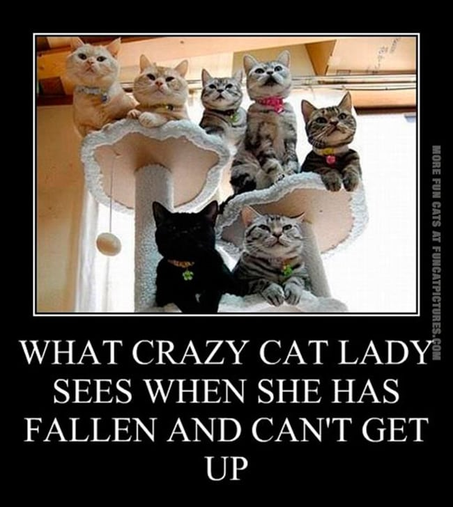 crazy cat ladies - thecats are watching you