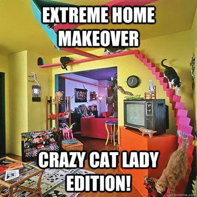 extreme makeover for crazy cat ladies homes