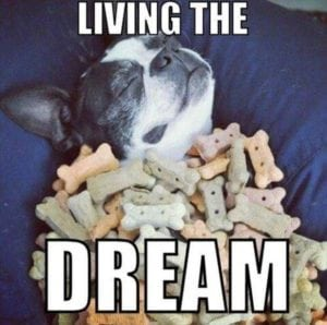 funny pug pictures dream
