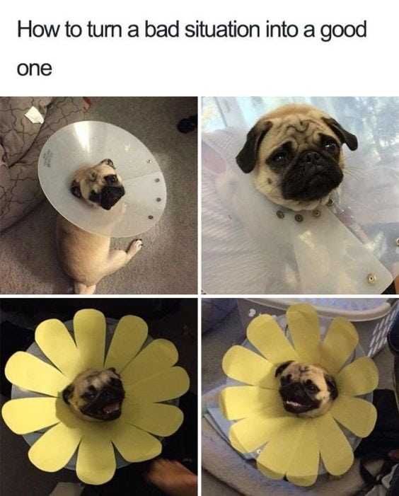 funny pug pictures flower cone