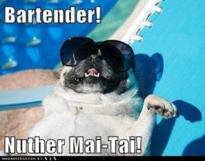 funny pug pictures holiday