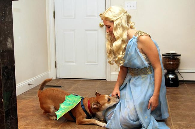 halloween costumes for pet and owners - game of thrones