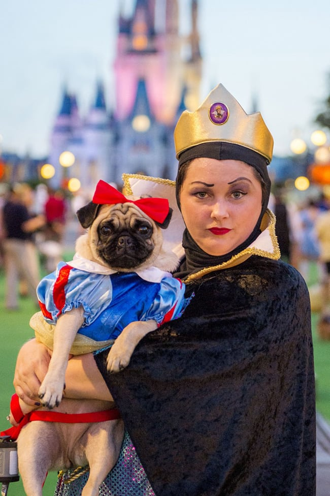 pet and owner halloween costumes - snow white and evil queen