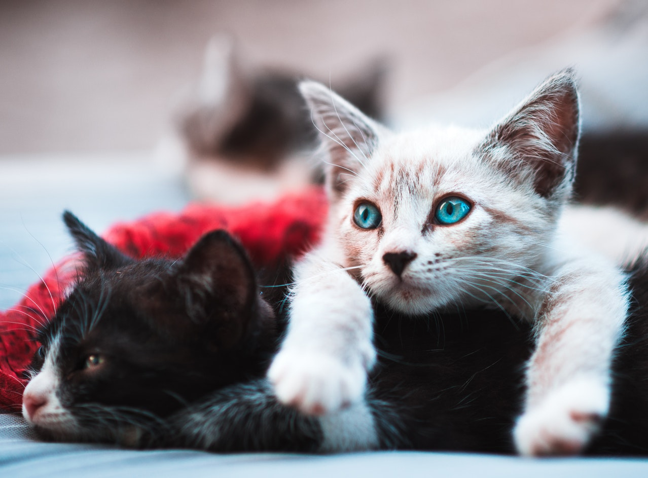 Two kittens lounging around