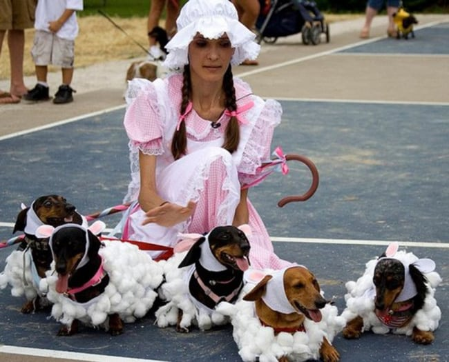 little bo-peep pet and owner halloween costume