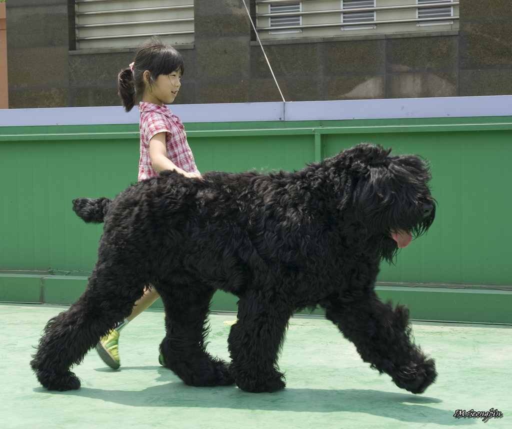 most expensive dog Black Russian Terrier