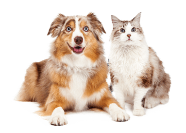 Petfirst dog and cat