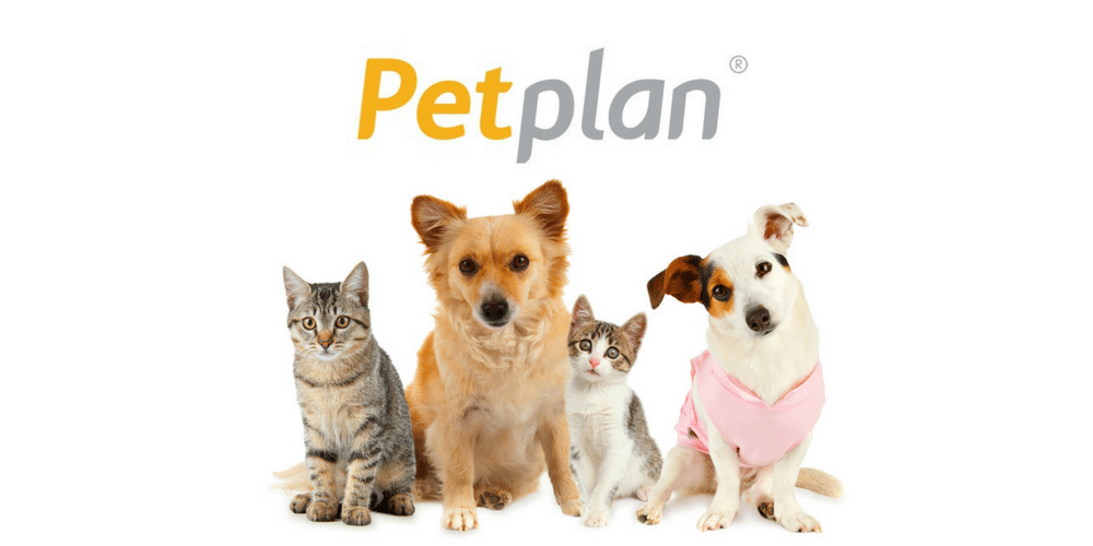 Petplan's happy dogs and cats
