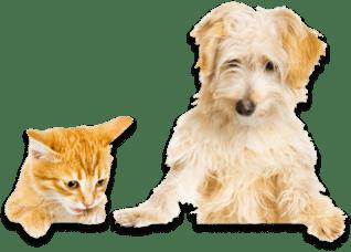 dog and cat on petplan pet insurance