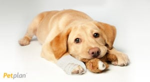 petplan pet insurance is a worldwide company