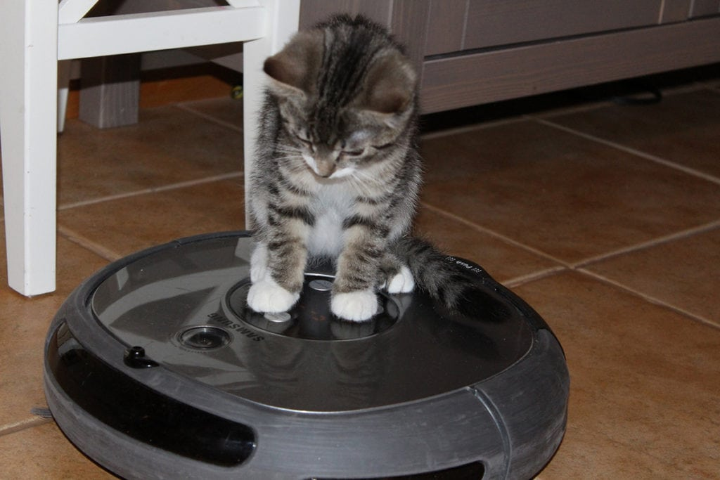cat sitting on top of a robot vacuum