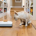 Yes! They Make Robot Vacuums for Pet Hair