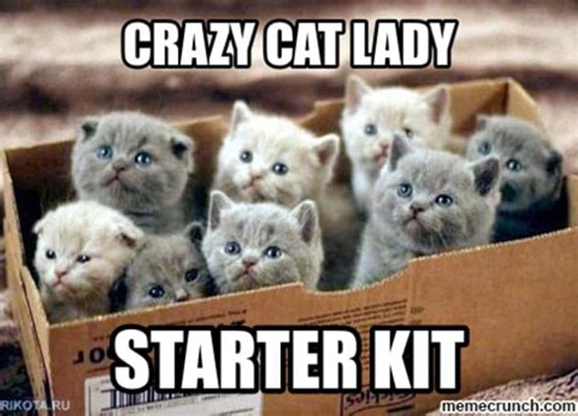 starter kit for crazy catladies
