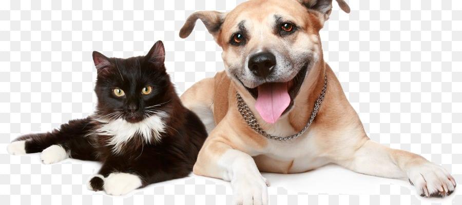 Trupanion cat and dog
