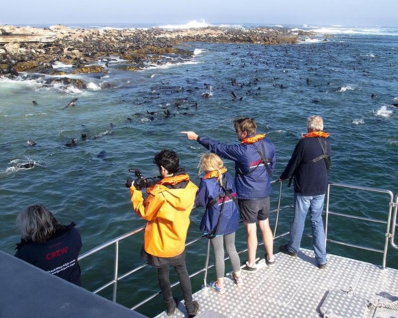gansbaai Great White Shark Capital of the World