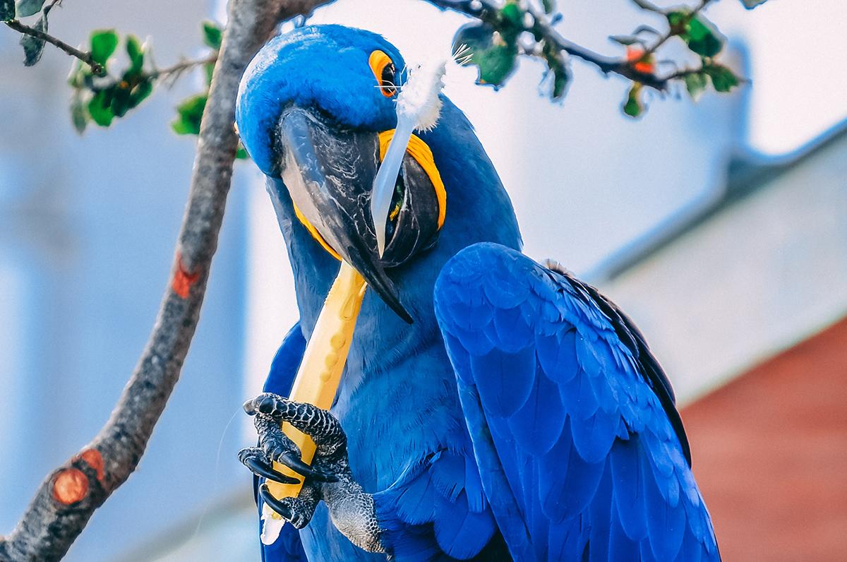 dental hygiene while you travel bird brushing
