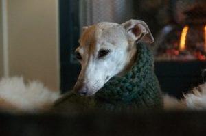 Fall Photos Sweater Dog