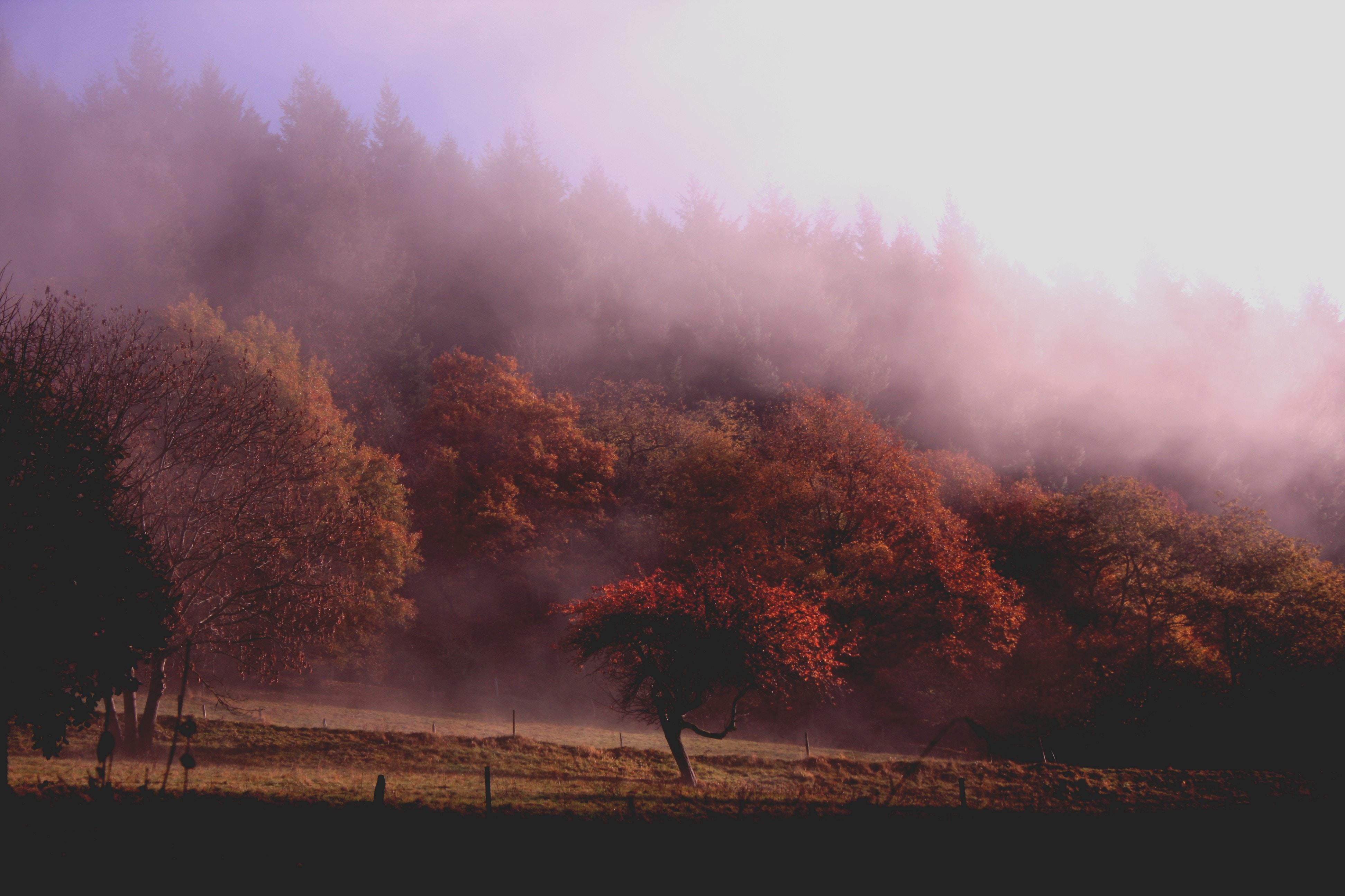 Fall Photos Misty Morning