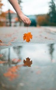 Fall Photos Leaf Reflection