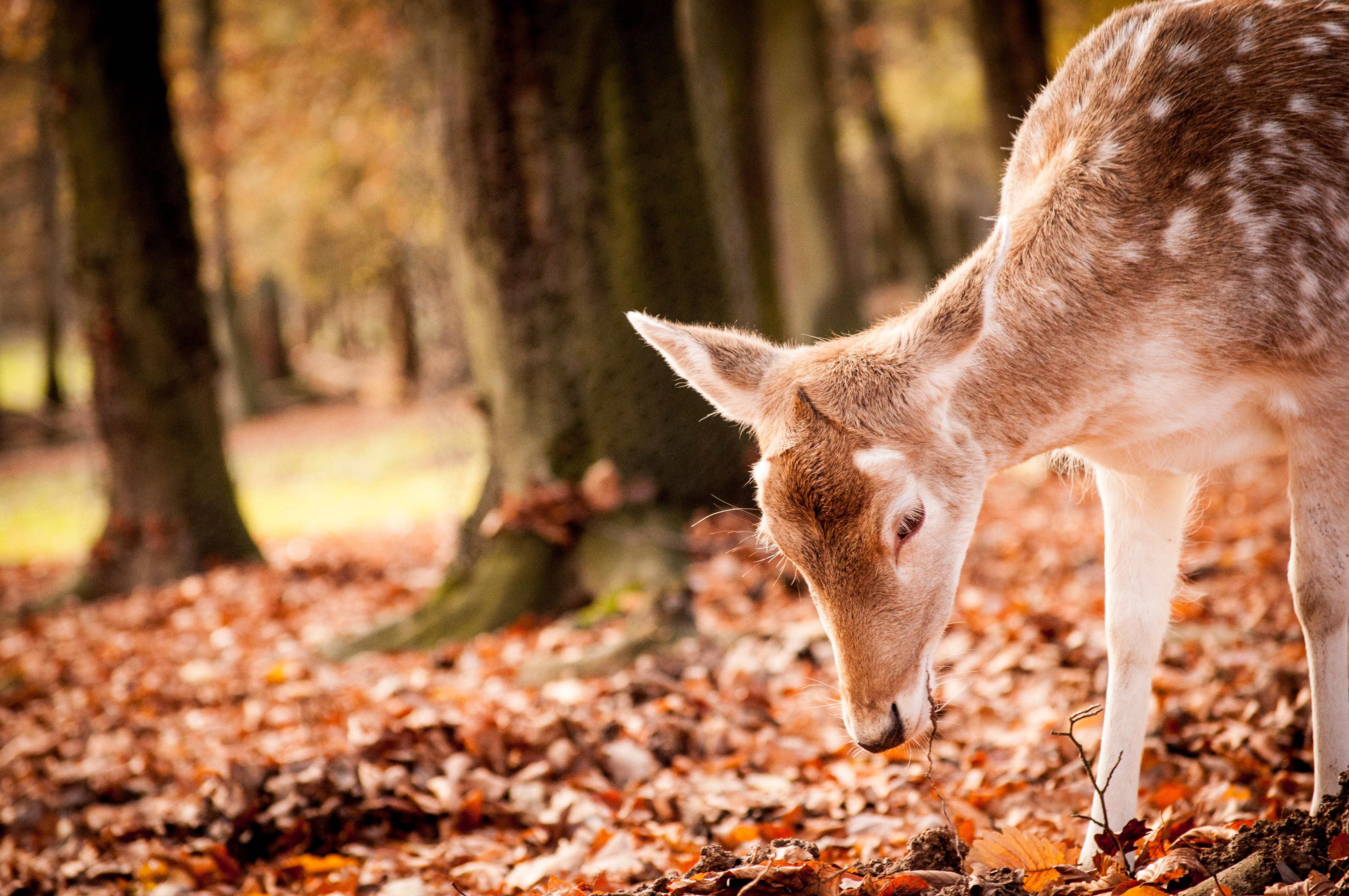 Fall Photos Deer Nature