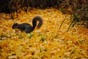 Fall Photos Squirrel