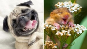 funny photos of laughing animals