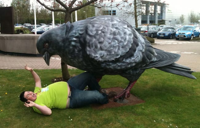 hilarious photos - attack of the giant pigeon