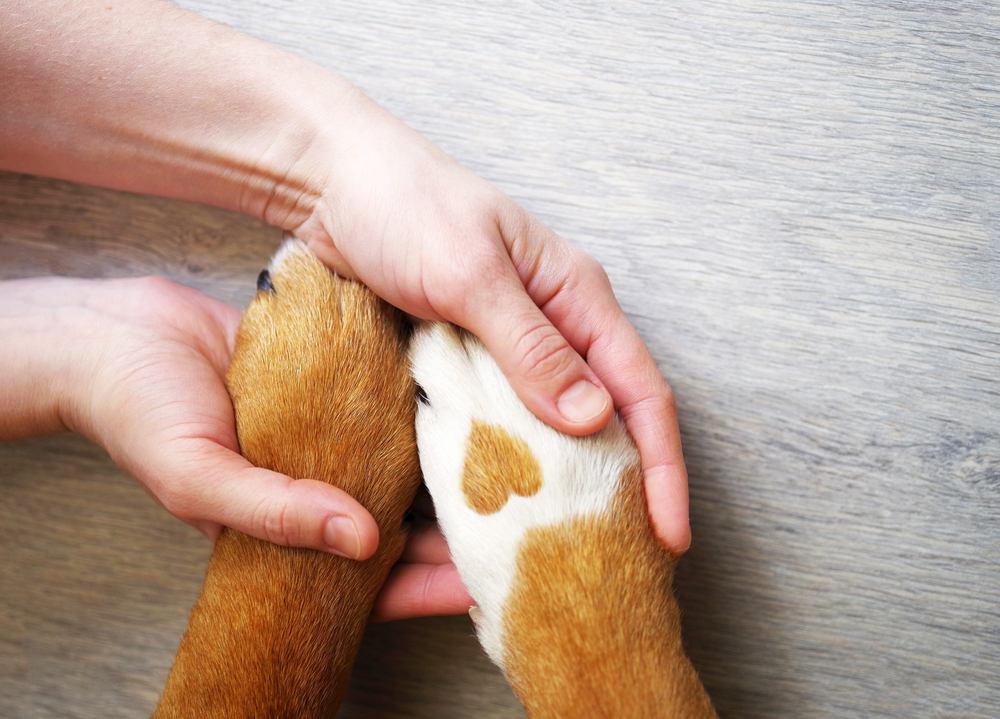 holding a dog's paw
