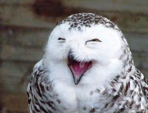laughing animals - owl