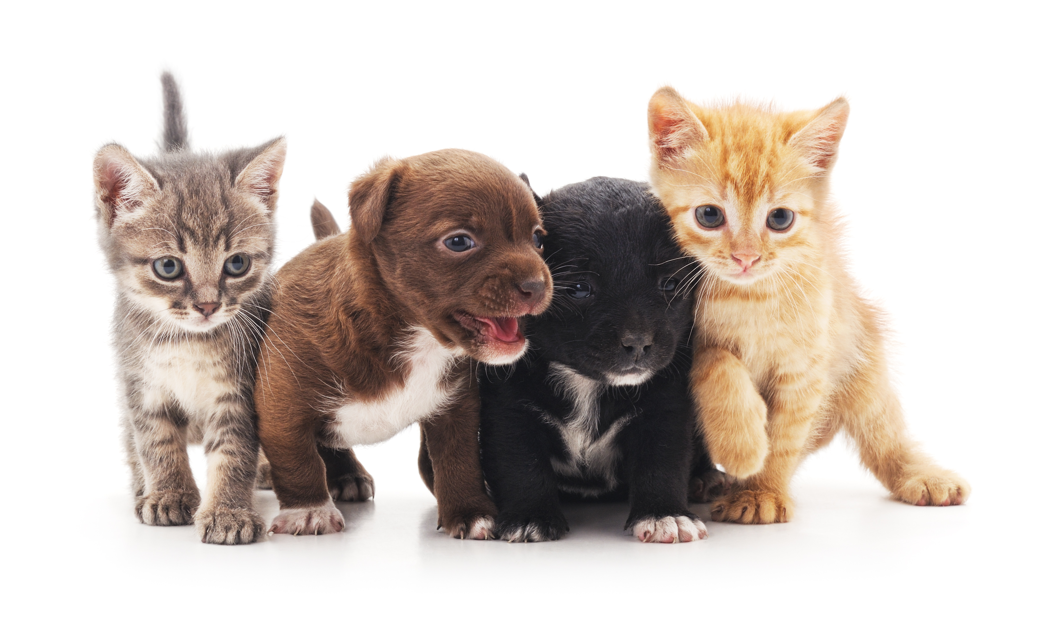 cute puppies and kittens need pet insurance; Trupanion review