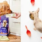 Best Dog Food Delivery Companies You Should Try Today