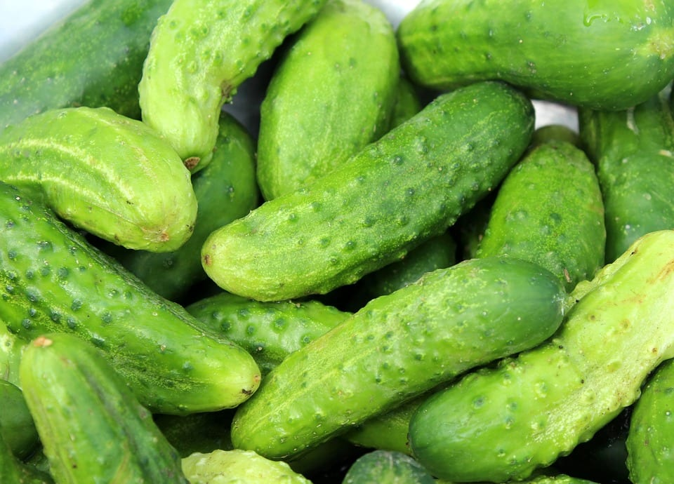 a bunch of cucumbers an almost zero calorie food