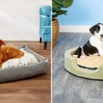 10 Best Dog Beds That Your Pooch Will Love
