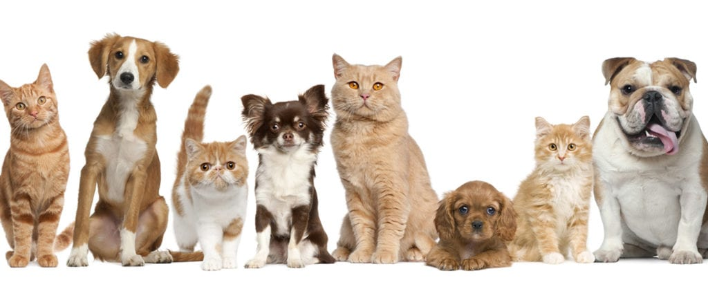 Group photo of dogs and cats